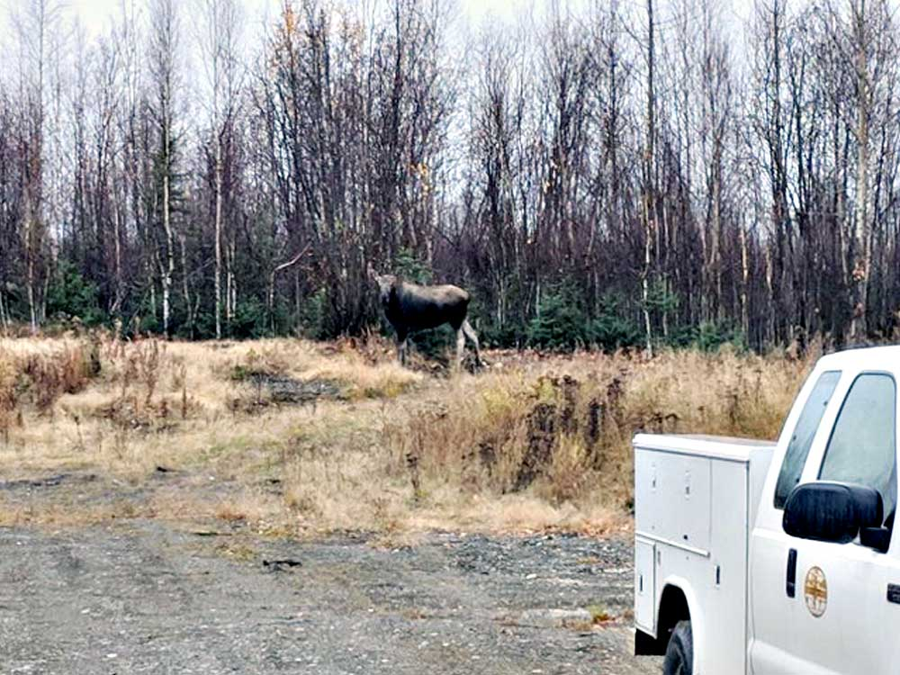IFT also, hangs out with a moose at jobsite in Anchorage AK.